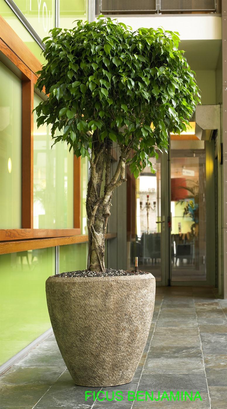 Kantoorplanten kopen of huren planten op kantoor voordelen - Plantas altas de exterior ...
