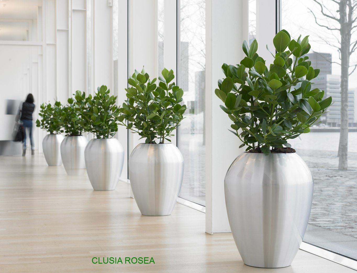 Kantoorplanten Kopen Of Huren Planten Op Kantoor Voordelen