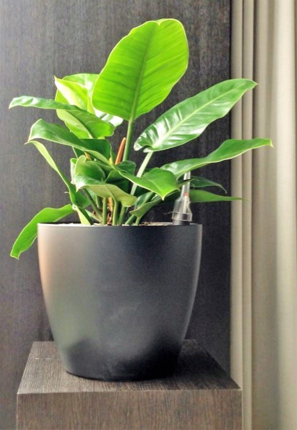 Acheter des plantes de bureau chez anygreen for Achat plante