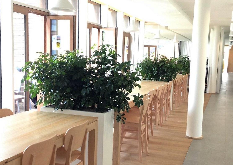 Planten kopen voor kantoor? Koop de juiste planten voor uw bedrijf