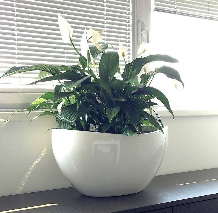 Acheter des plantes de bureau chez anygreen for Achat de bureau