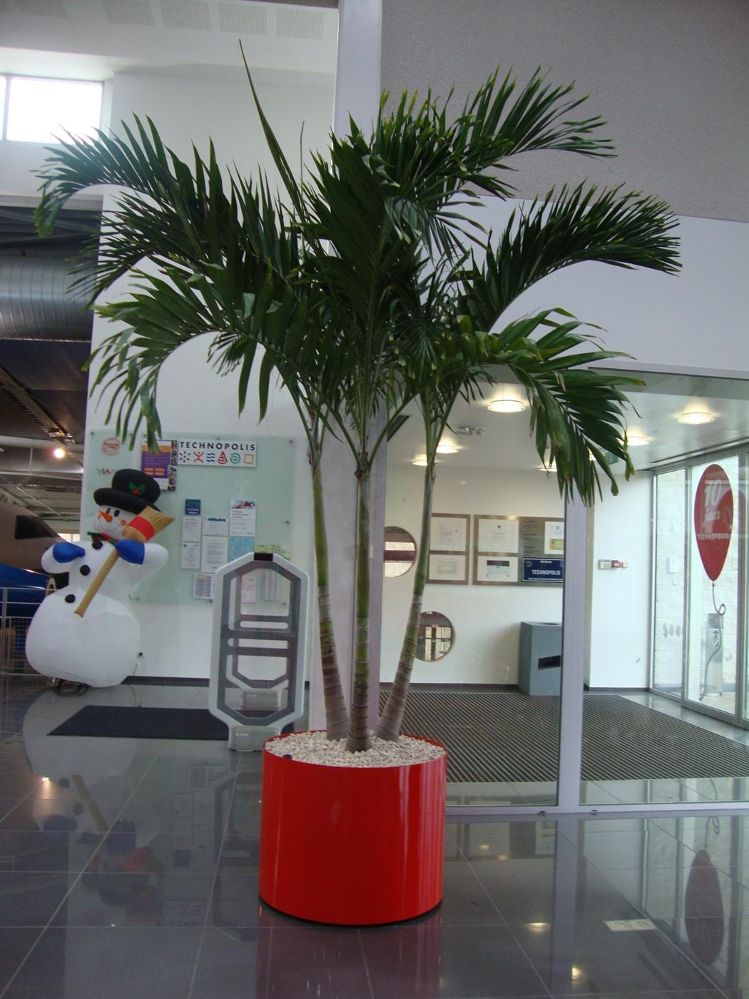 Plantes exotiques pour votre firme any green for Plantes exotiques
