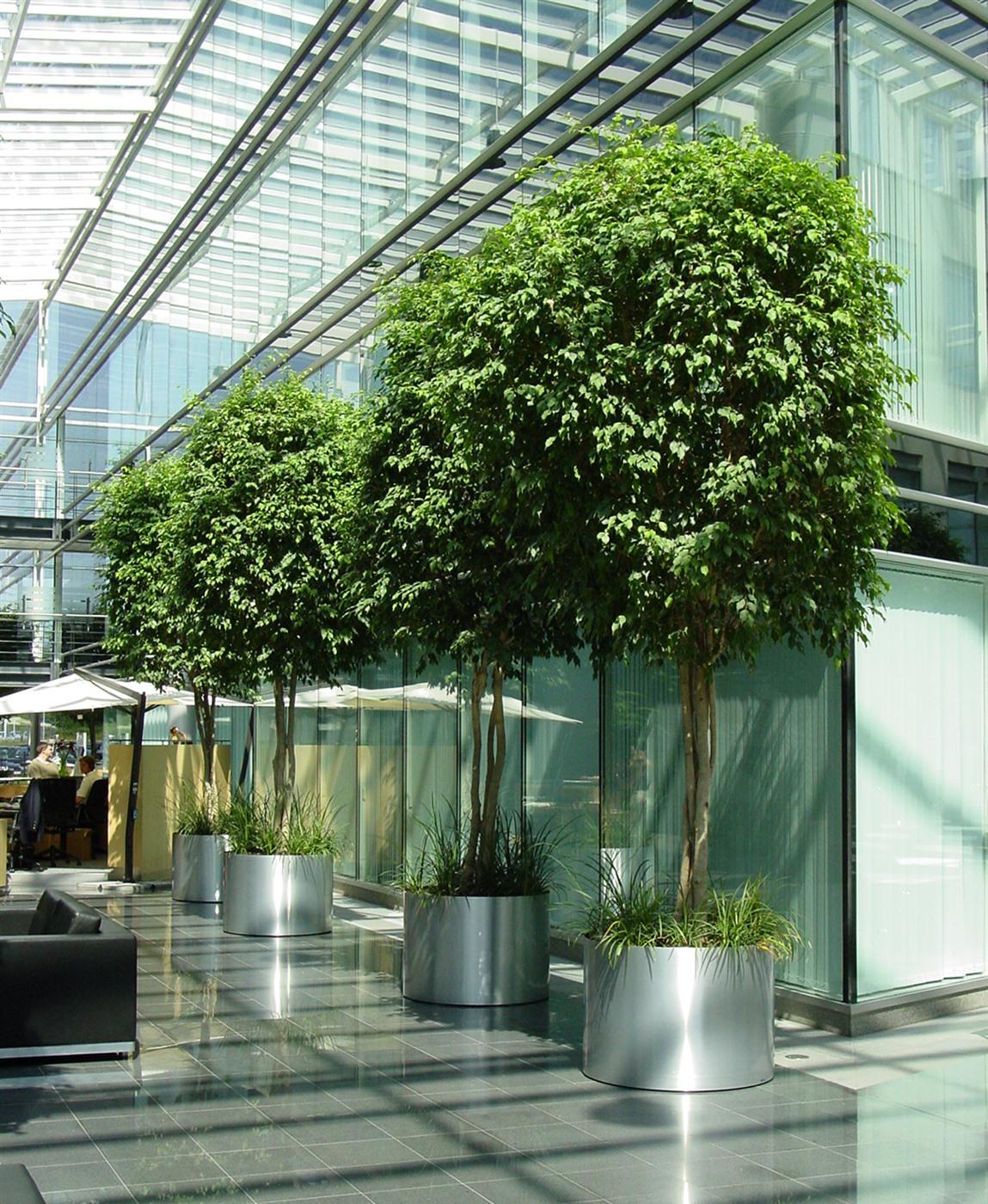 Plantes exotiques pour votre firme any green for Plantes exotiques artificielles
