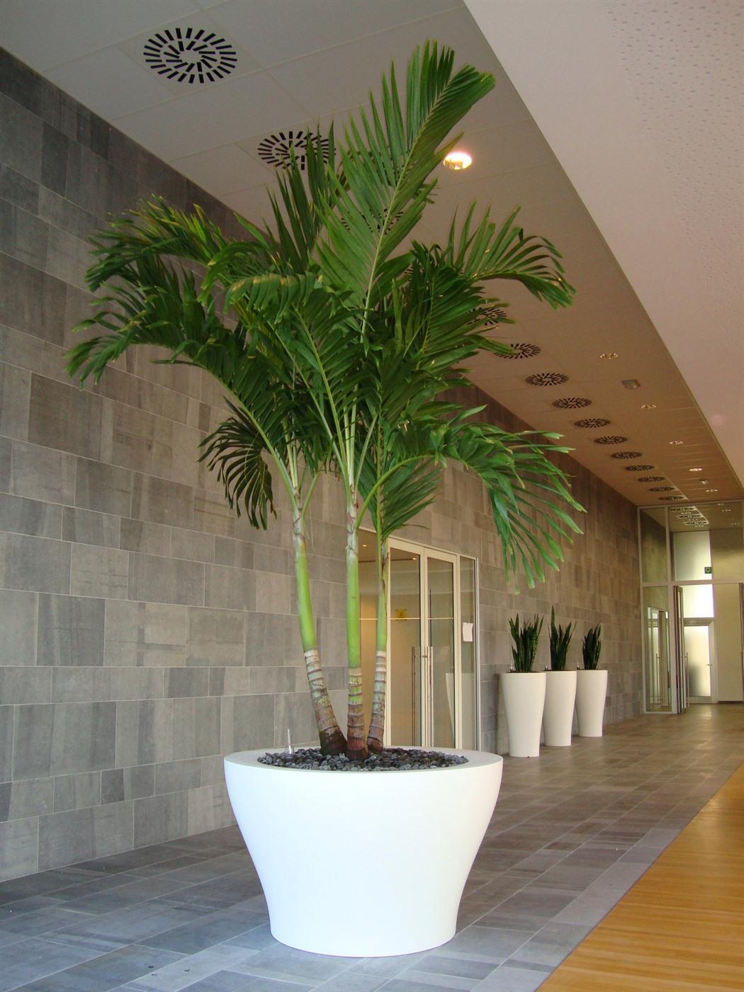 acheter ou louer des plantes et arbres exotiques pour votre bureau. Black Bedroom Furniture Sets. Home Design Ideas