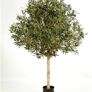 Natural olive topiary tree