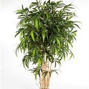 New natural bamboo