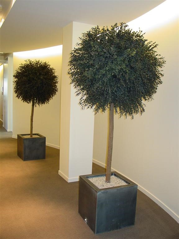 Acheter ou louer des plantes stabilis s pour votre bureau for Acheter des plantes