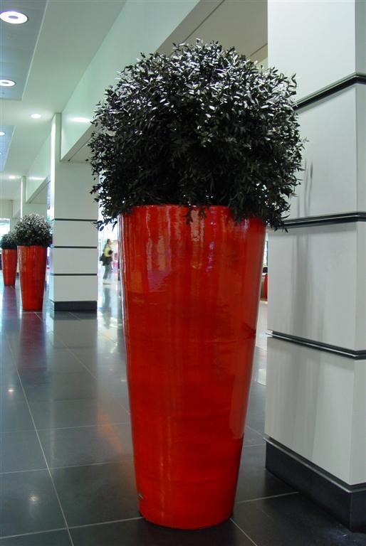 Acheter ou louer des plantes stabilis s pour votre bureau for Ou acheter des plantes