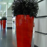 Preserved plants