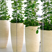 Natural plant holders