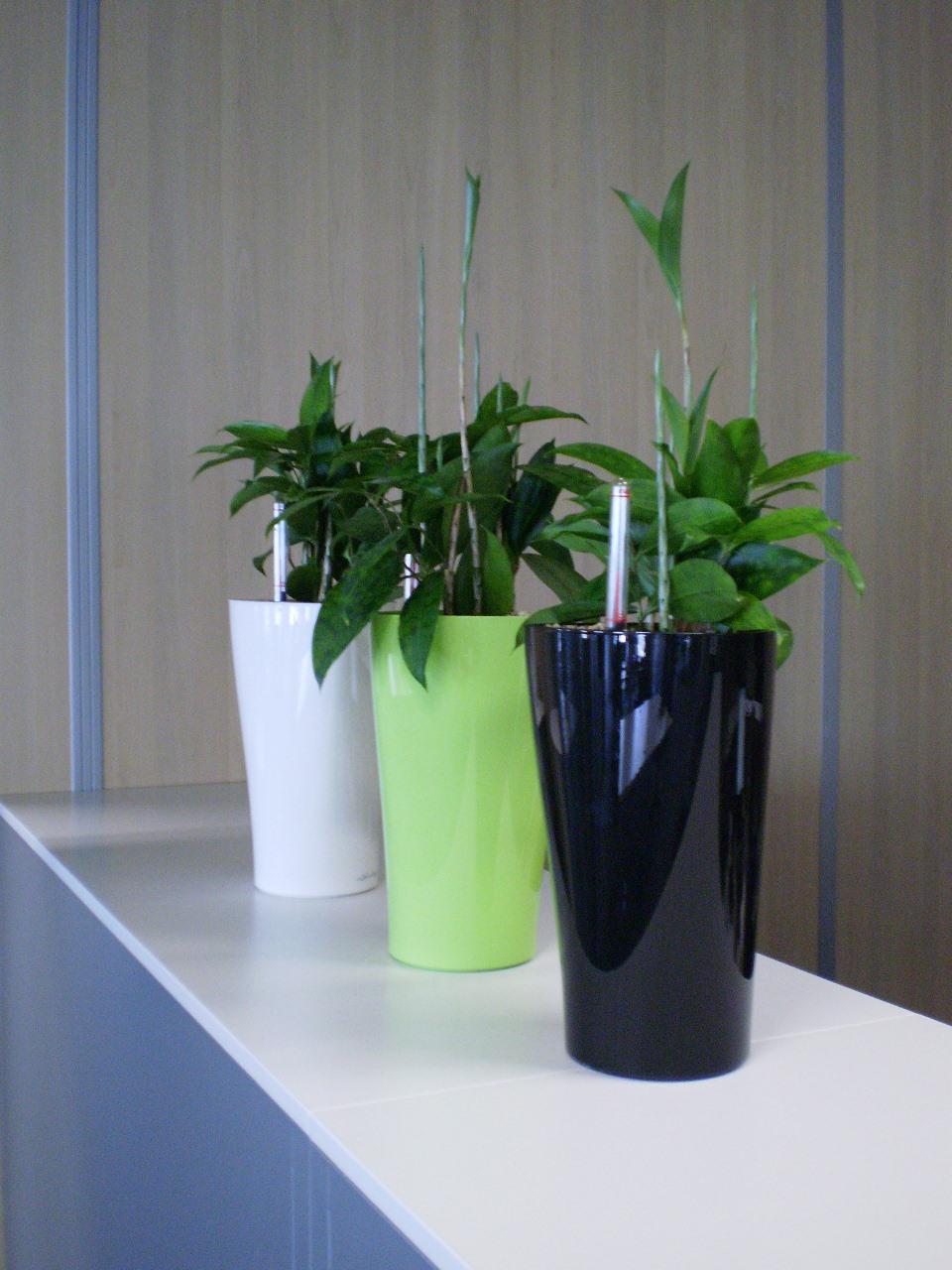 Plastic Plant Holders