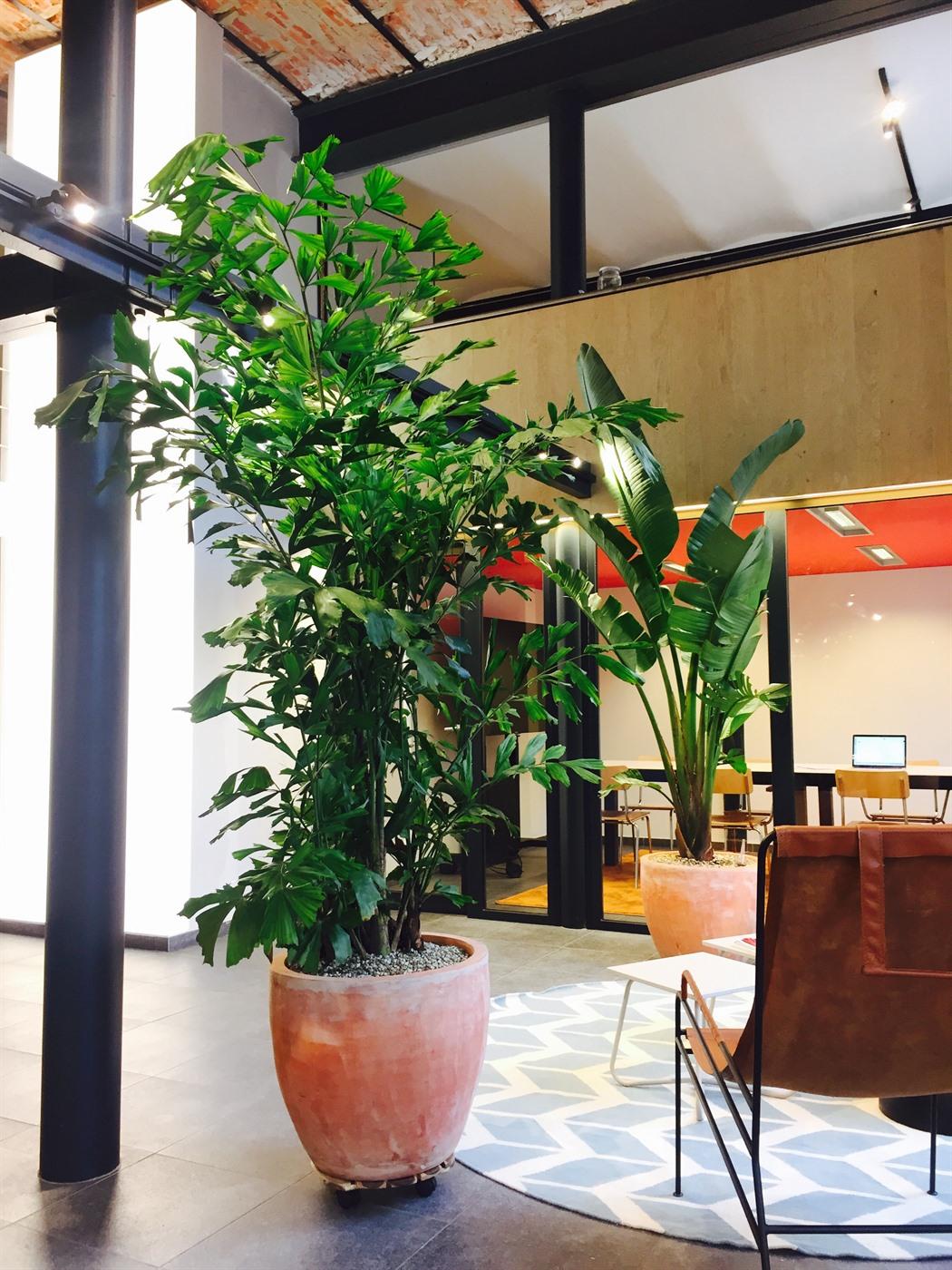 acheter ou louer des bacs plantes en c ramique. Black Bedroom Furniture Sets. Home Design Ideas