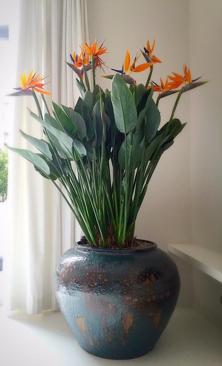 Ceramic Plant Holders