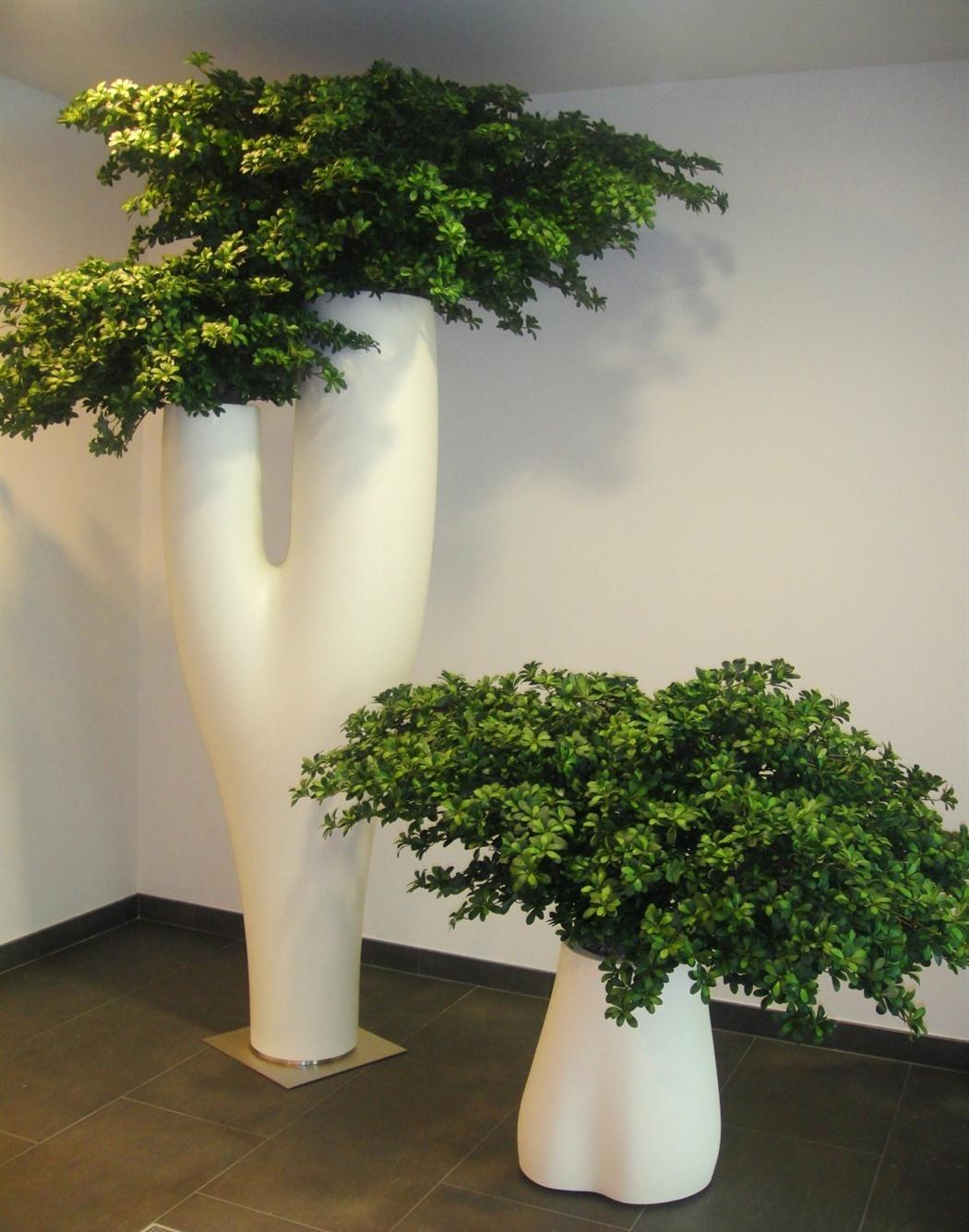 acheter ou louer des cacs plantes design. Black Bedroom Furniture Sets. Home Design Ideas
