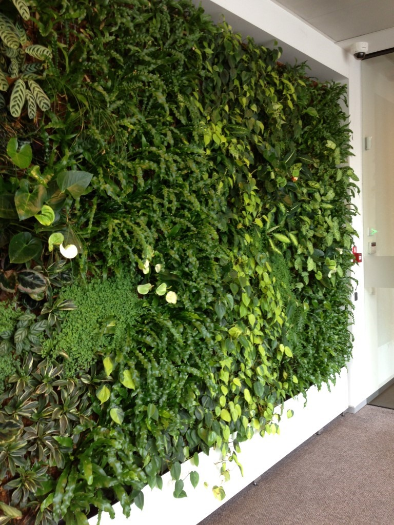 Nextgen Living Wall