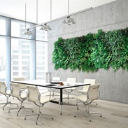 NextGen Living green walls