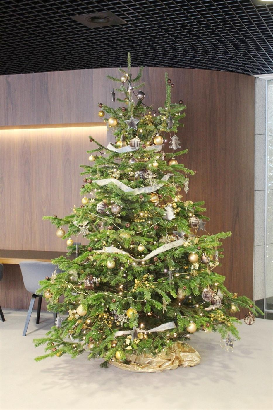 Rent a Christmas tree