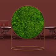 G-Line: design dividers with moss