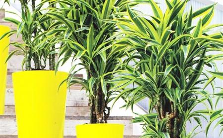10 Planten Die Weinig Of Geen Zonlicht Nodig Hebben