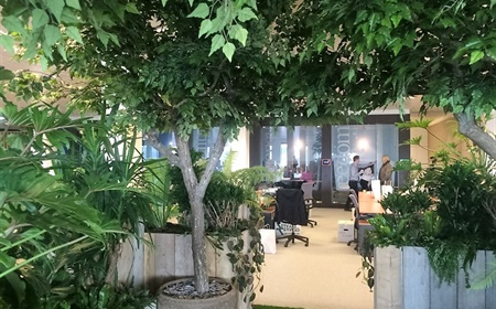 Plants for a healthier, open plan office