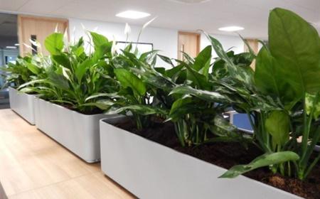 Planten Op Kantoor : De sterkste planten voor kantoor