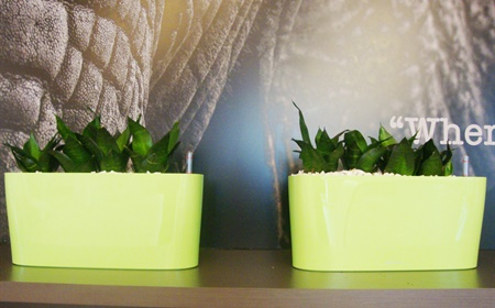 Planten Op Kantoor : Voordelen van planten op kantoor