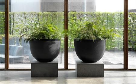 Planten Op Kantoor : Planten die de lucht op kantoor zuiveren